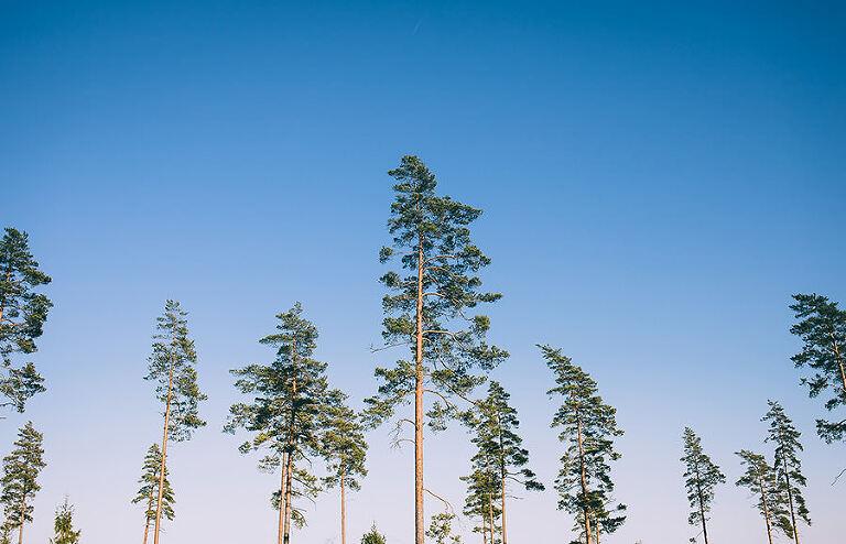 Träd i Emmaboda